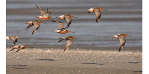 Vogelbeobachtungs-Touren