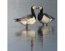 Von Ehepartnern,Hippies und Emanzen - Das Beziehungsleben der Vögel